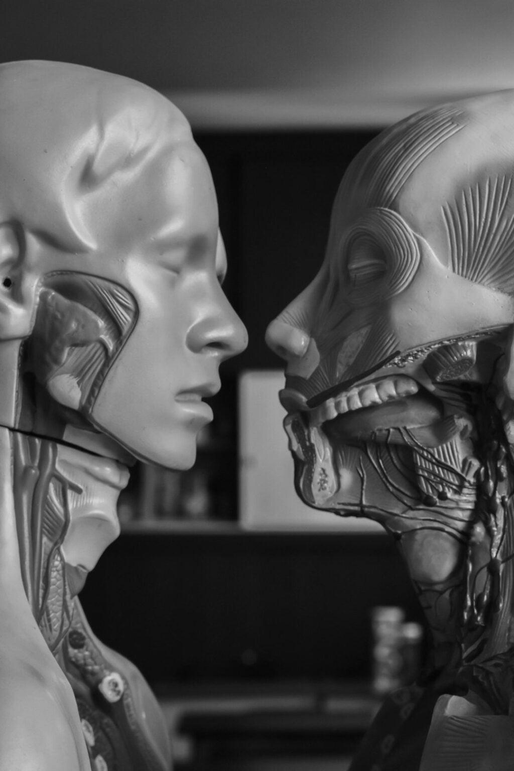 Model anatomiczny głowy